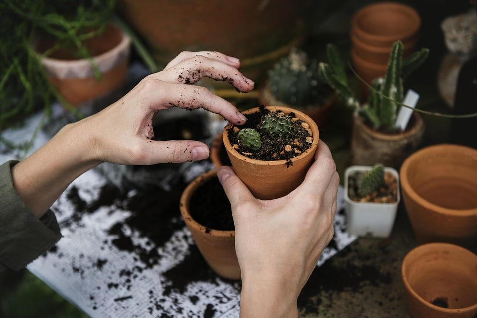 compléments alimentaires base plantes bonne mauvaise idée